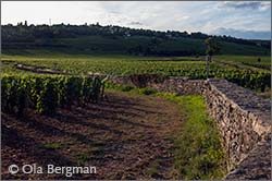 Beaune vineyards, Burgundy.
