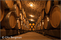 The cellars of Domaine Dujac in Burgundy.