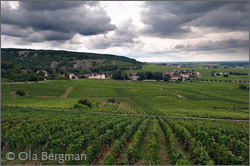 Chambolle-Musigny, Burgundy.