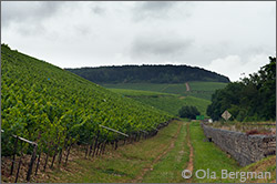 Chablis grand cru Bougros.