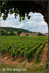 Chambolle-Musigny in Burgundy.