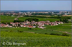 View over Pommard, Burgundy.