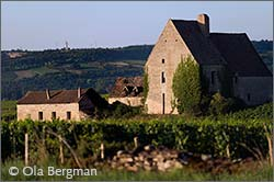 Morgeot, Chassagne-Monrachet, Burgundy.