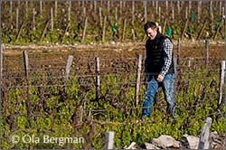 Laurent Fournier, Domaine Jean Fournier in Marsannay.