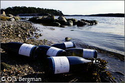 Burgundy bottles by the Baltic Sea.
